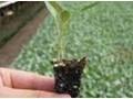 育苗专用泥炭 (3)