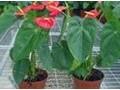 花卉专用泥炭 (2)