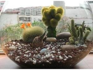 花卉陶粒 (4)