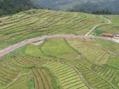 国家林草局协同相关专家考察贵州独山水苔产业发展